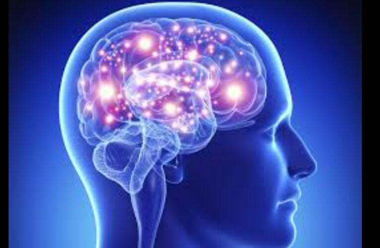 5 food for Brain development for children