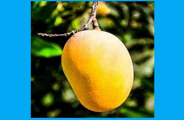 Mango side effects
